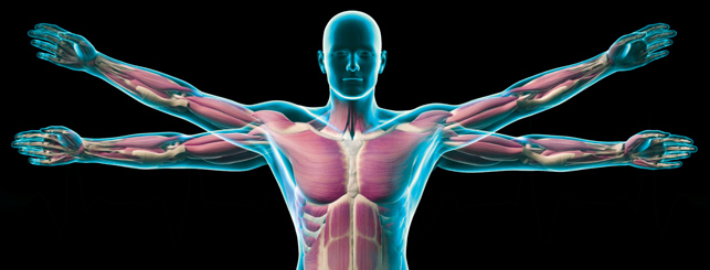 Exercise Science - Programs of Study - Academics - Manchester ...